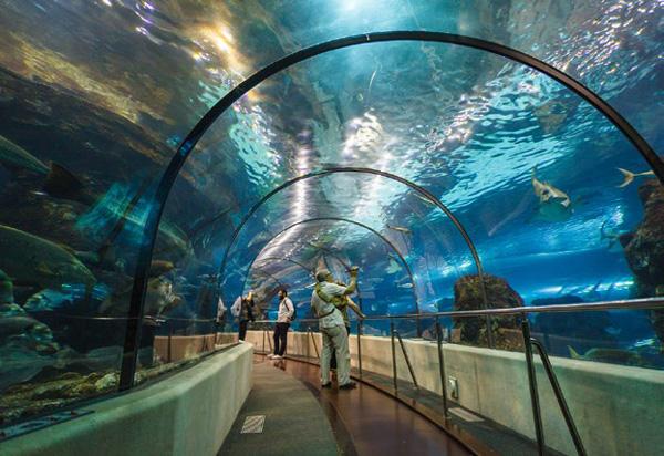 Nou acord amb L' Aquàrium de Barcelona