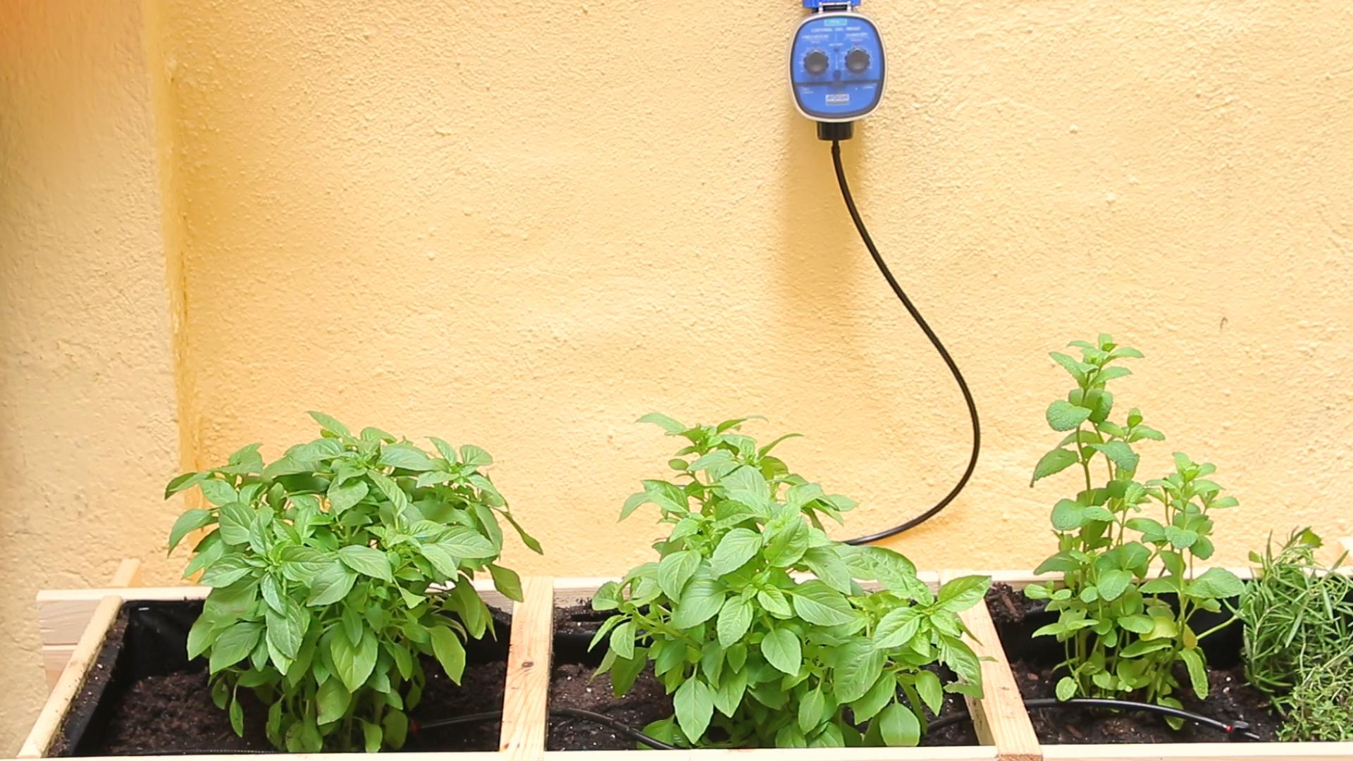 4 idees per regar les plantes a les vacances!